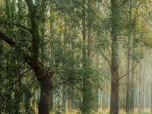 miško-priežiūra