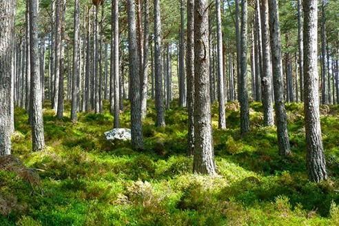 miškų-priežiūra